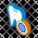 Bacteria Bacterium Biological Icon