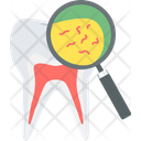 Tooth Germs Icon