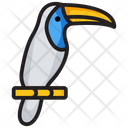 Bird Toucan Specie Icon