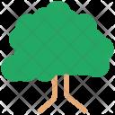 Tree Nature Ecology Icon