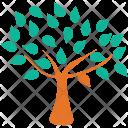 Generic Tree Spreading Icon