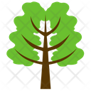 Hemlock Tree Spruce Icon