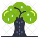 Tree Plant Learning Icon