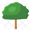 Tree Natural Tree Shrub Icon