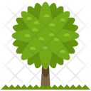 Tree Forest Icon