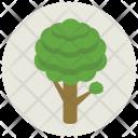 Tree Growth Greenery Icon