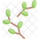 Tree buds bloom Icon