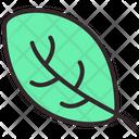 Fresh Leaf Icon