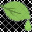 Acne Treatment Tree Icon