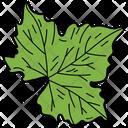 Tripartite Leaf Leaf Foliage Icon