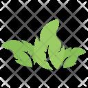 Tripartite Leaf Icon