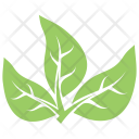 Tripartite Leaves Icon