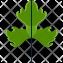 Tripinnate Greenery Leaf Icon