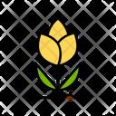 Tulips Flower Flowers Icon