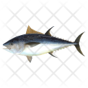 Tuna Fish Sea Icon