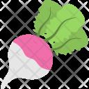 Turnip Root Vegetable Icon