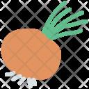 Rutabaga Swedish Turnip Icon