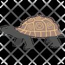 Turtle Tortoise Animal Icon