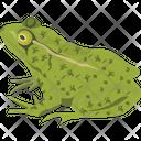 Turtle Animal Frog Icon