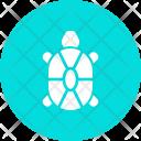 Turtle Tortoise Sea Icon
