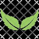 Two Birch Plant Icon