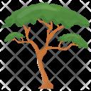 Umbrella Pine Tree Icon