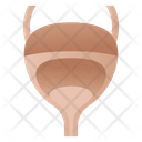 Urinary Bladder Icon