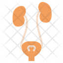Urinary System Icon