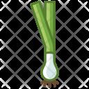 Vegetable Bio Onion Icon