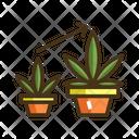 Vegetative Icon