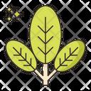 Veggie Options Veggie Options Veggies Basket Icon