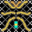 Walkingstick Icon