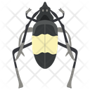 Water Bug Insect Pest Icon