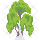 Weeping Willow Foliage Icon