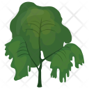 Weeping Willow Tree Icon