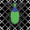 Weevil Beetle Icon