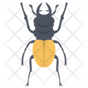 Weevil Beetle Insect Scarab Beetle Icon