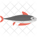 Shark Fish Animal Icon