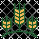 Wheat Wheat Farm Wheat Farminng Icon