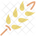Wheat Ear Durum Icon