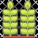 Wheat Food Grain Icon