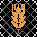 Wheat Grain Whole Icon