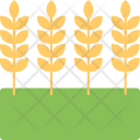 Barley Ears Bunch Icon