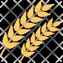 Whole Grain Wheat Icon