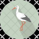 White Ibis Aves Icon