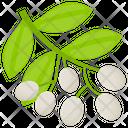 White Baneberries Icon