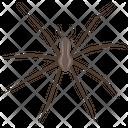 Widow Spider Icon