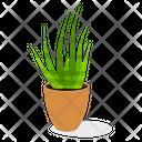 Indoor Plant Ornamental Plant Houseplant Decoration Icon