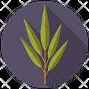 Willow Tree Nature Icon