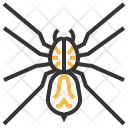 Wolf Spider Insect Icon